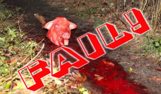 FAIL imagebot