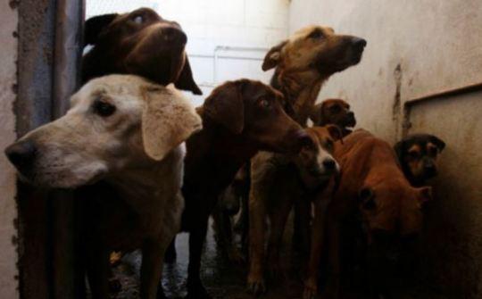 dogs ebola Capture