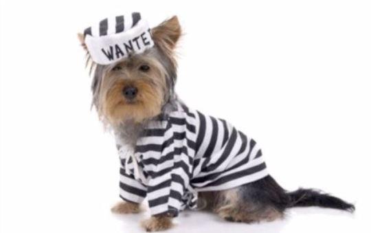 dog convict Capture