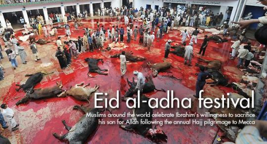 eid al adha slaughter Capture